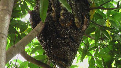 Meses mais quentes são favoráveis ao surgimento de abelhas