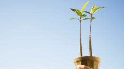 SEMA lança Projeto de Educação Ambiental para o Funcionalismo Público