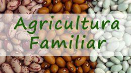 200 famílias locais são contempladas com sementes de feijão