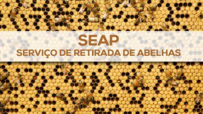 SEAP realiza serviço de retirada de abelhas