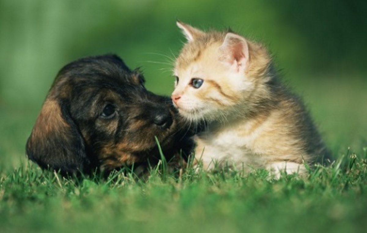 Município começa a vacinar cães e gatos contra a raiva animal