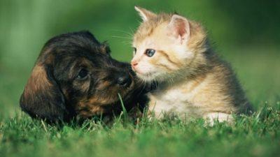 Vacinação de cães e gatos acontece em Jabequara