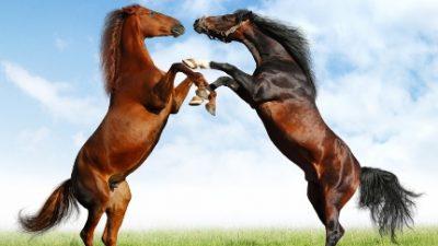 Cavalos são apreendidos pela SEAP