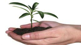 São Francisco do Conde terá horto de produção de mudas e plantas
