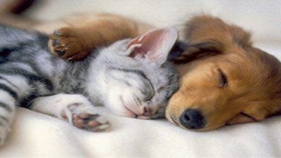 Campanha de Vacinação contra raiva para cães e gatos chega às ruas do Centro