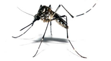 Arboviroses: São Francisco do Conde está na luta contra o mosquito transmissor da dengue, chikungunya e Zika