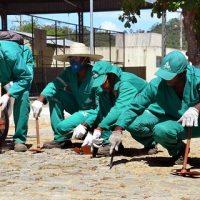 Secretaria de Serviços, Conservação e Ordem Pública realizou mutirão de limpeza em Santo Estevão