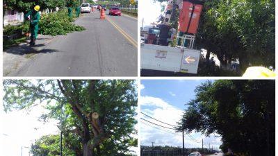 SESCOP realizou poda de árvores no bairro do Caípe