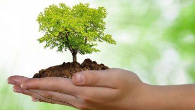 Dia Internacional do Meio Ambiente será celebrado no dia 07 de junho