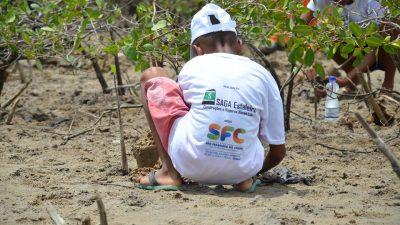 1.000 mudas de manguezal foram plantadas no bairro do Drena, em São Francisco do Conde