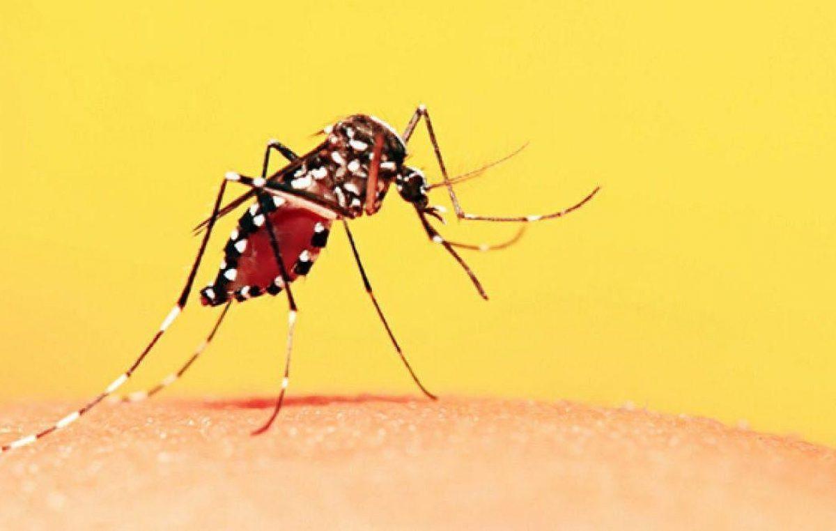 Ainda é possível se vacinar contra febre amarela nas Unidades de Saúde do município