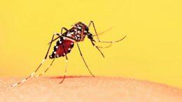 Campanha de Vacinação Contra a Febre Amarela será iniciada nesta segunda-feira (19)