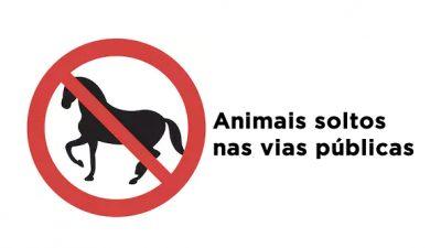 Animais soltos nas vias públicas em São Francisco do Conde são recolhidos e proprietários penalizados