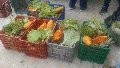 Com entrega de alimentos do PAA, município de São Francisco do Conde fortalece agricultura familiar