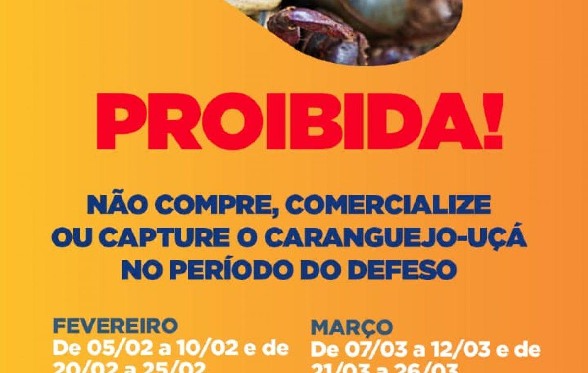 Defeso do caranguejo-uçá acontece em períodos defevereiro e março
