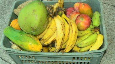 Prefeitura entrega alimentos adquiridos pelo Programa de aquisição de Alimentos (PAA)