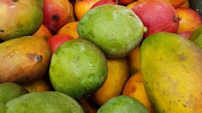PAA auxilia no escoamento da produção de agricultores familiares e na oferta de alimentos a pessoas em situação de vulnerabilidade