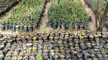 SEMAP fará doações gratuitas de mudas de plantas em alusão ao Dia Mundial do Meio Ambiente